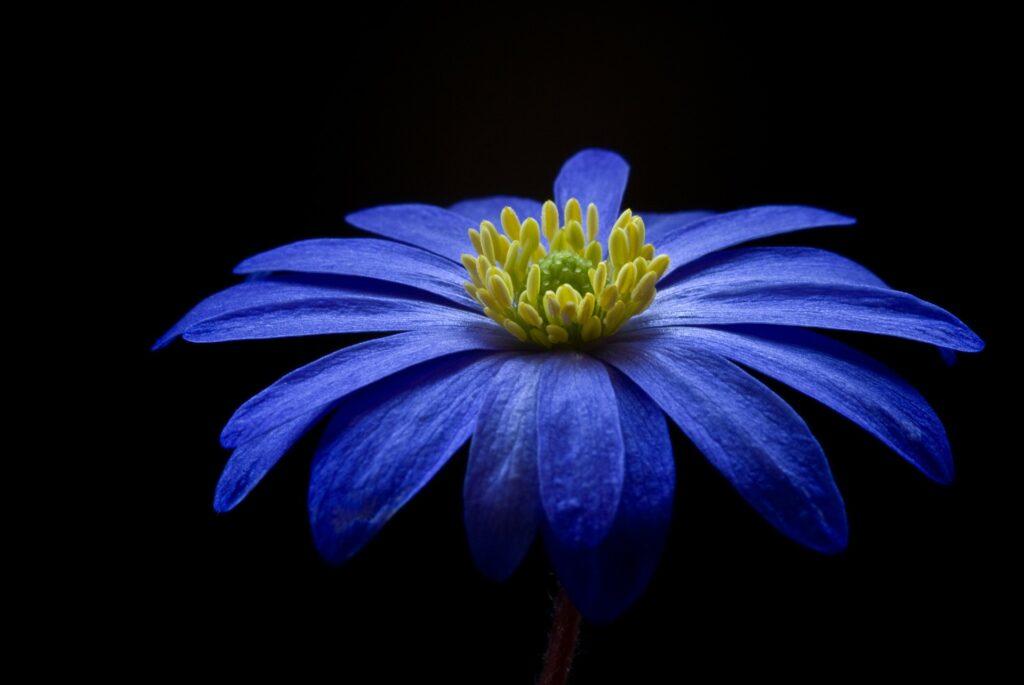 aromaterapia darannur