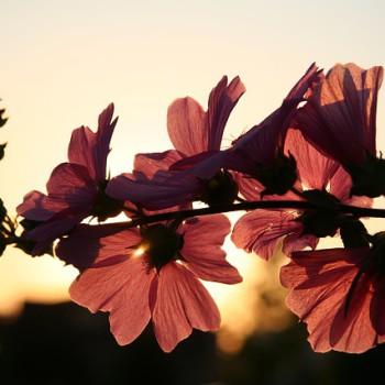 flower-646127_640